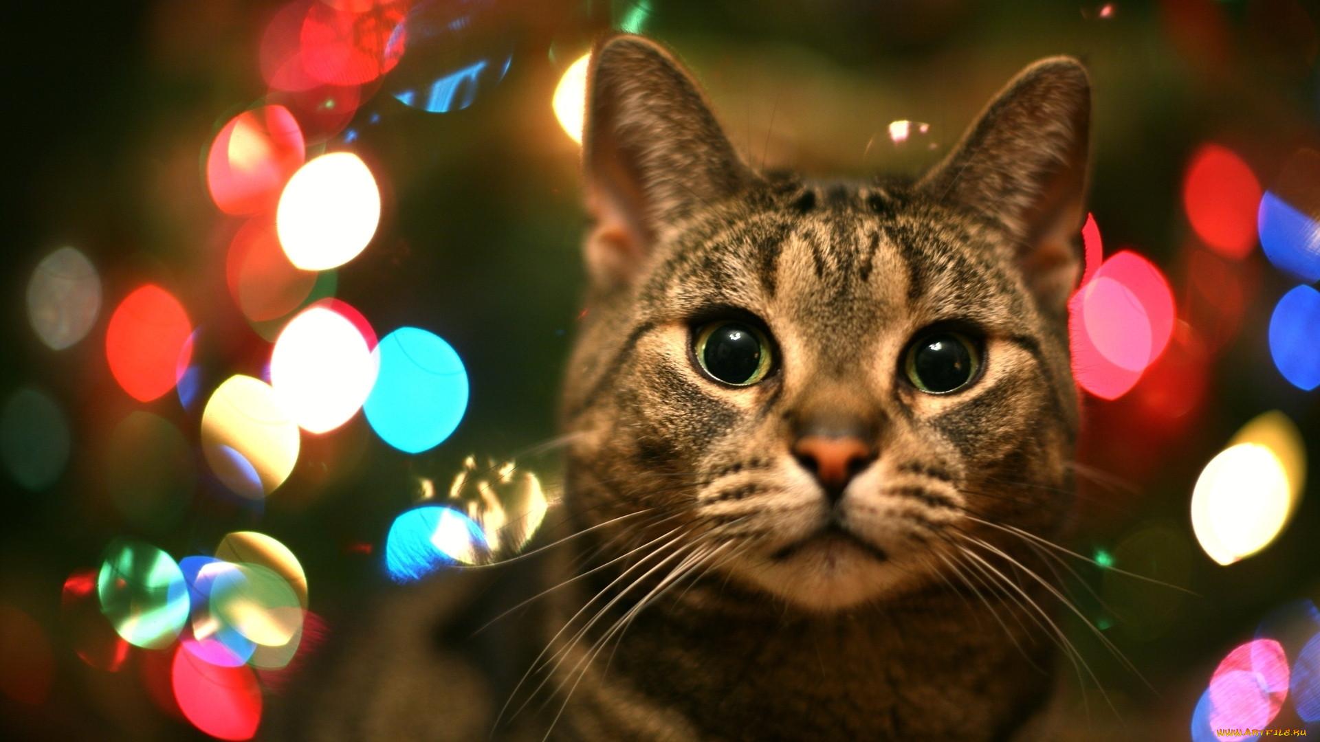 Картинки кошки года